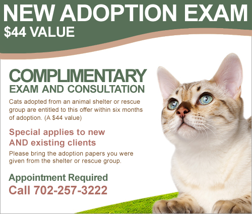 All About Cats Veterinary Hospital, Las Vegas, NV 89147