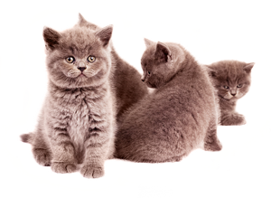 All About Cats Veterinary Hospital| Cat Vaccines